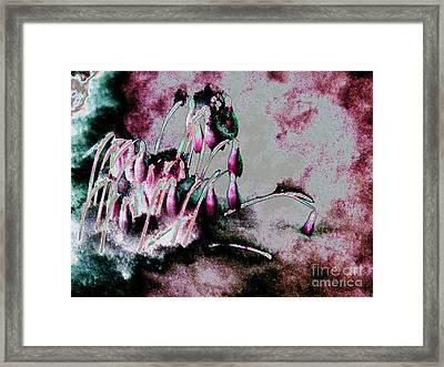Snowy Snowdrops Framed Print by Carol Lynch