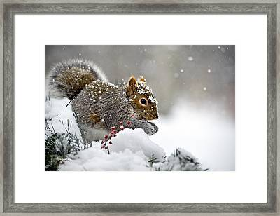 Snowy Squirrel Framed Print