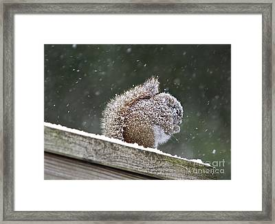 Snowy Squirrel Framed Print by Karin Pinkham