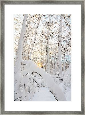 Snowy Starburst Framed Print by Bryan Bzdula