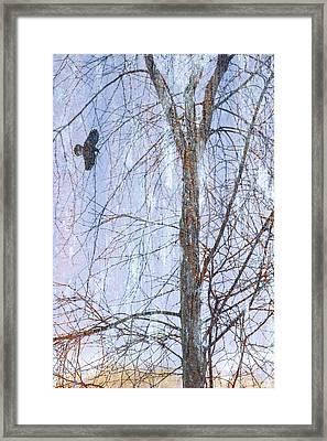 Snowy Tree Framed Print by Carol Leigh