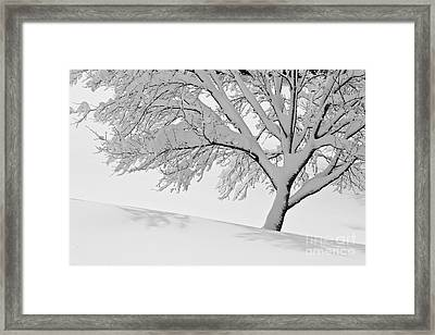 Snowy Tree Framed Print by Jay Nodianos