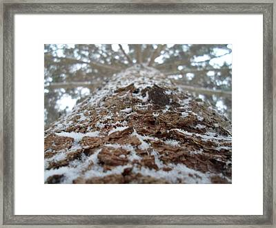Snowy Tree Framed Print by Jenna Mengersen