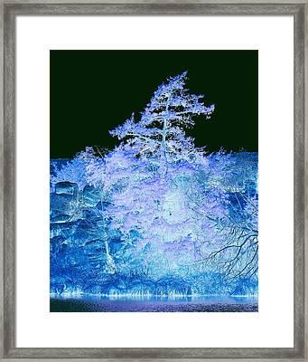 Snowy Tree Framed Print by Mickey Harkins