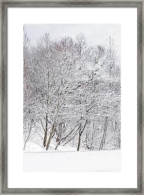 Snowy Trees In Winter Park Framed Print by Elena Elisseeva