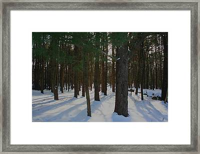 Snowy Trees Framed Print by Stephen Melcher