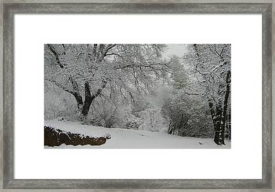 Snowy Trees Framed Print