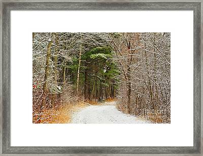 Snowy Tunnel Of Trees Framed Print by Terri Gostola
