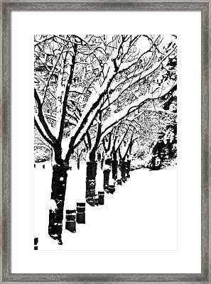Snowy Walk Framed Print