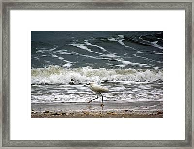 Snowy White Egret Framed Print