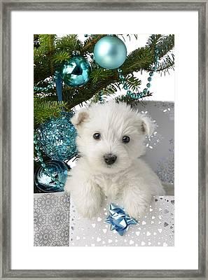 Snowy White Puppy Present Framed Print by Greg Cuddiford