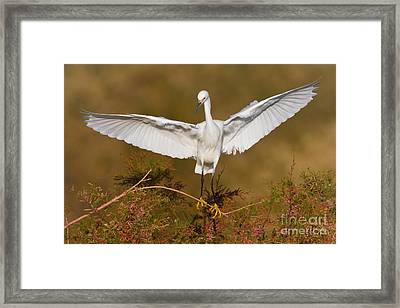 Framed Print featuring the photograph Snowy Wingspread by Bryan Keil