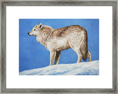 Snowy Wolf Framed Print by Crista Forest