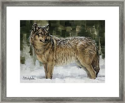 Snowy Wolf Framed Print