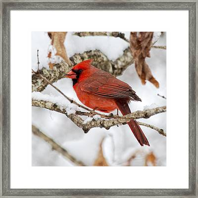 Snowy Wonder Framed Print by Betsy Knapp