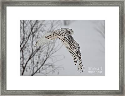 Snowy_3264 Framed Print