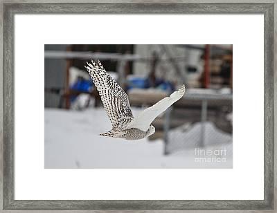 Snowy_3276 Framed Print