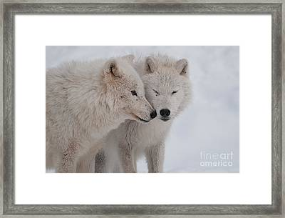 Snuggle Buddies Framed Print