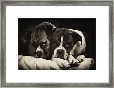 Snuggle Bug Boxer Dogs Framed Print by Stephanie McDowell