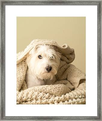 Snuggle Dog Framed Print by Edward Fielding