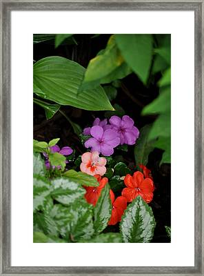 Snuggled In Framed Print by Larry Jones