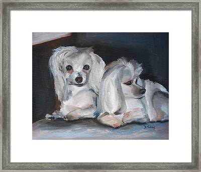 Snuggles And Sarge The Maltese Framed Print