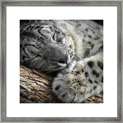 Snuggles Framed Print