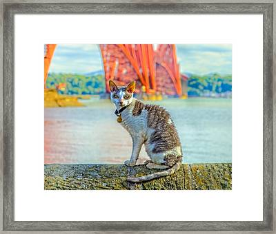 Snuggles The Cat Framed Print by Tylie Duff