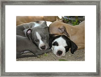 Snuggly Framed Print