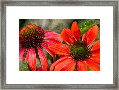 So Happy Together....... Framed Print