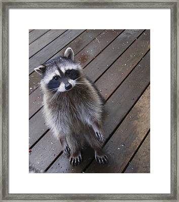 So I Put My Left Foot In First Framed Print by Kym Backland