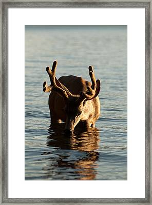 So I'm Thirsty Framed Print by Bruce Gourley