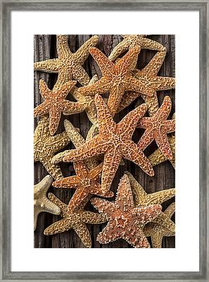 So Many Starfish Framed Print by Garry Gay