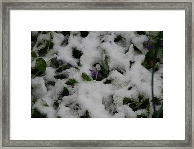 Framed Print featuring the photograph So Much For An Early Spring by David S Reynolds