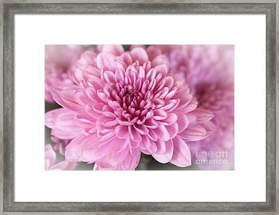 So Pink Framed Print
