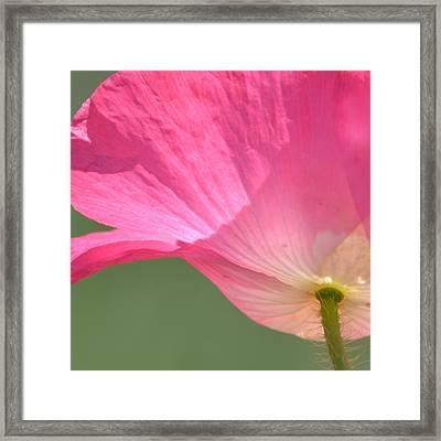 So Pretty Pink Poppy Framed Print