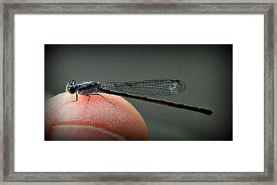 So Small Framed Print by Reid Callaway