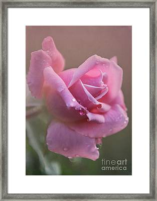 So Sweet Framed Print by Sabrina L Ryan