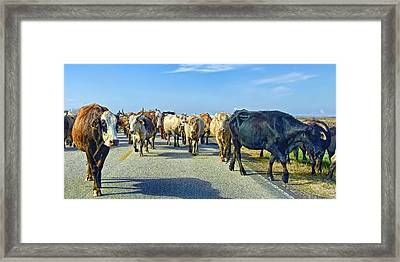 So This Is What Farm To Market Road Means - Panoramic Framed Print by Gary Holmes
