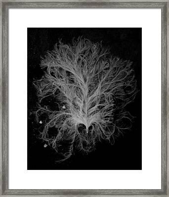 Soaked Framed Print