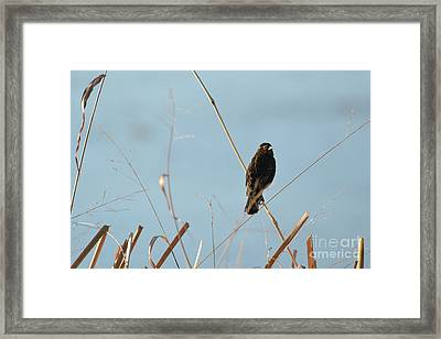 Soaking In The Sun Framed Print
