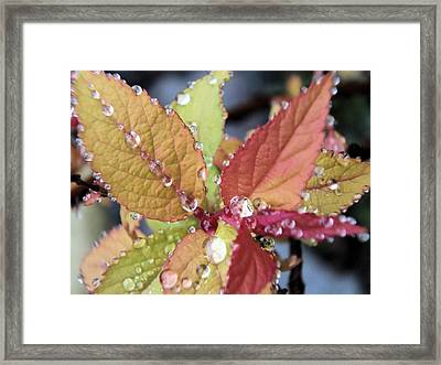 Soaking Rain Framed Print