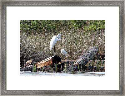Soaking Up The Rays Framed Print