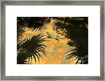 Soaking Up The Rays Framed Print by Halifax photographer John Malone