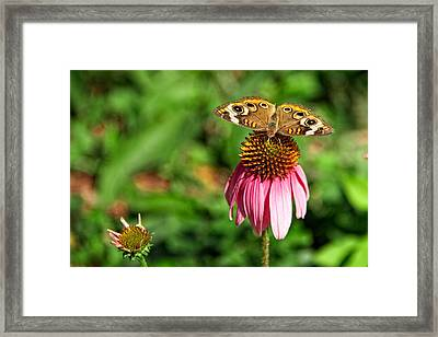 Framed Print featuring the photograph Soaking Up The Sun by Dave Files