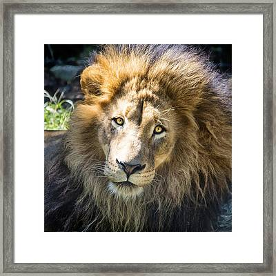 Soaking Up The Sun Framed Print