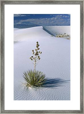 Soaptree Yucca In Gypsum Sand White Framed Print by Konrad Wothe