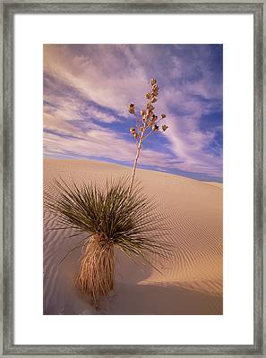 Soaptree Yucca  On Dune White Sands Framed Print by