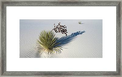 Soaptree Yucca Yucca Elata At Sand Framed Print by Panoramic Images