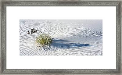 Soaptree Yucca Yucca Elata Framed Print by Panoramic Images